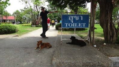 Wat Chalong, Phuket, Dogs, Toilet and Andrew