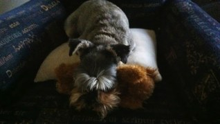 Maggie and Teddy