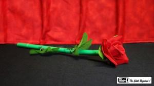 Break Away Rose by Mr. Magic - Trick
