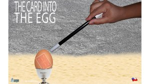 THE CARD INTO THE EGG (Gimmicks and Online Instructions) by Alan Alfredo Marchese and Aprendemagia
