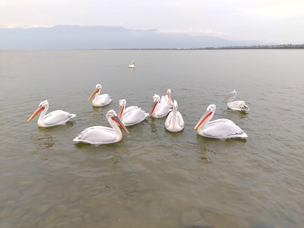 Φωτογραφικό Workshop στη λίμνη Κερκίνη με το TCL Plex
