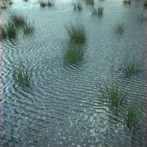 Λιβάδι μετά από βροχή Image source AccuWeather