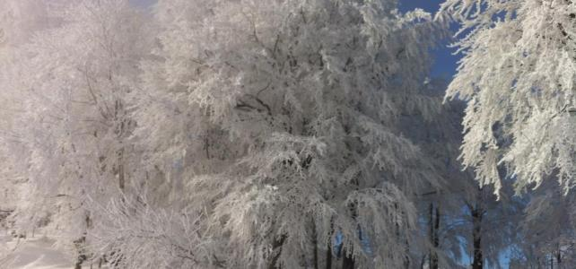 Traumhafte Schneeschuhwanderung Reisalpe