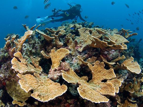 barriera corallina, vittima dell'inquinamento