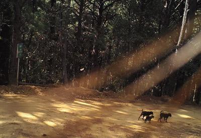Perros en Área Natural Protegida. Fotografía Archivo Conanp.