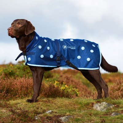 Magnetic Dog Coat with blue spots by Canine Magnetix