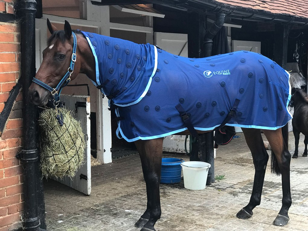 Famous racehorse Annacotty wearing his Equine Magnetix® Magnetic rug and neck piece with navy spots
