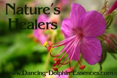 Aromatherapy Flower Essences Natural Healers