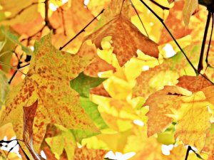 leaves background image