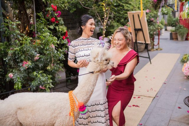 Bright Colourful Wedding in Sydney With South American Vibes