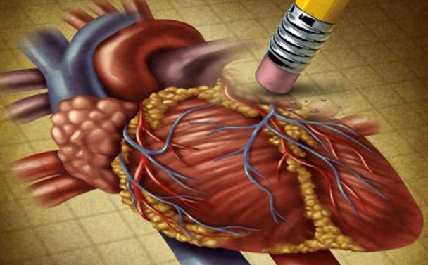 心臓の写真