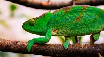 Découvrez la faune et les caméléons des Tsingy de Bemaraha