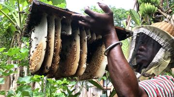 Apiculteurs malgaches avec la compagnie du miel de Madagascar