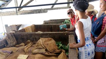 La fermentation du cacao à Madagascar