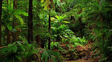 Visitez les forêts tropicales de Madagascar