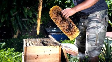 Ruche moderne à Madagascar avec la compagnie du miel