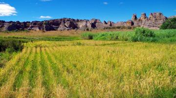 Découvrez la plantation biologique de l'hotel le Relais de la Reine à Madagascar