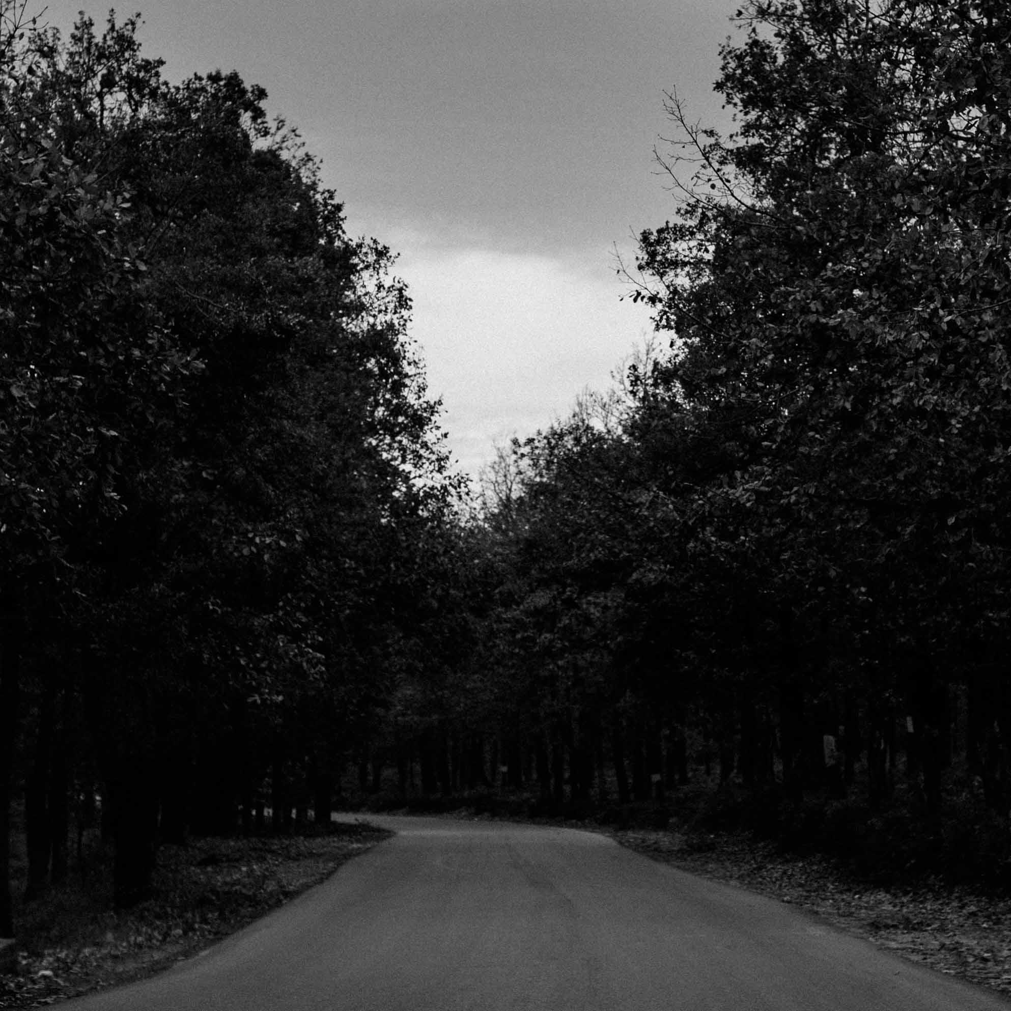 Sur la route d'Azeffoun 1