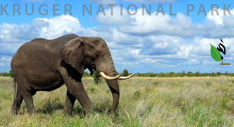 Kruger Park's biological diversity is in serious trouble! Part 1.