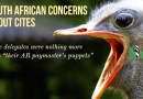 SOUTH AFRICAN CONCERNS ABOUT CITES