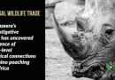 Illegal Wildlife Trade, Corruption & the Need to Legalise the Rhino Horn Trade