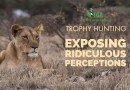 Lies about Lion Hunting – Exposing Ridiculous Perceptions