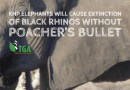 Why Kruger's Elephants will Cause the Extinction of its Black Rhinos!