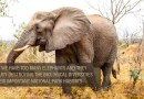 In Support of Proper Management of South Africa's Wildlife Heritage