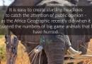 The Elephant 'Murderer'!