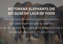 Botswana's Elephants Die Because of Lack of Food