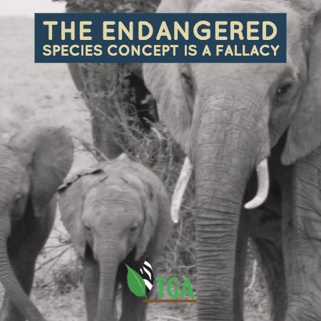 The us fish wildlife service re the zimbabwean elephant the endangered species concept sciox Gallery