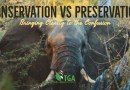Conservation vs Preservation – Bringing Clarity to the Confusion