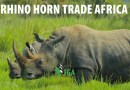 PROA Announces the Launch of Rhino Horn Trade Africa (RHTA),
