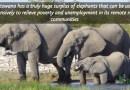Elephants & Human Population Dynamics of Africa