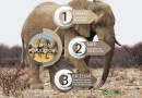 Elephants and the Carrying Capacity of Habitat