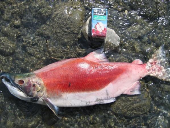ak-anchorage-fish-2