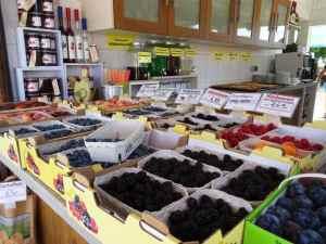 Ferienwohnung Dresden Lockwitz Gemüse und Obst zum Direktkauf