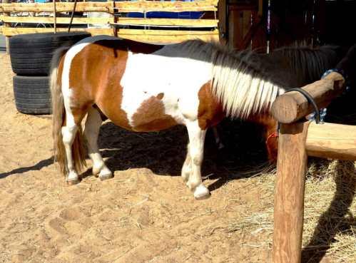 Ponys im Gehege