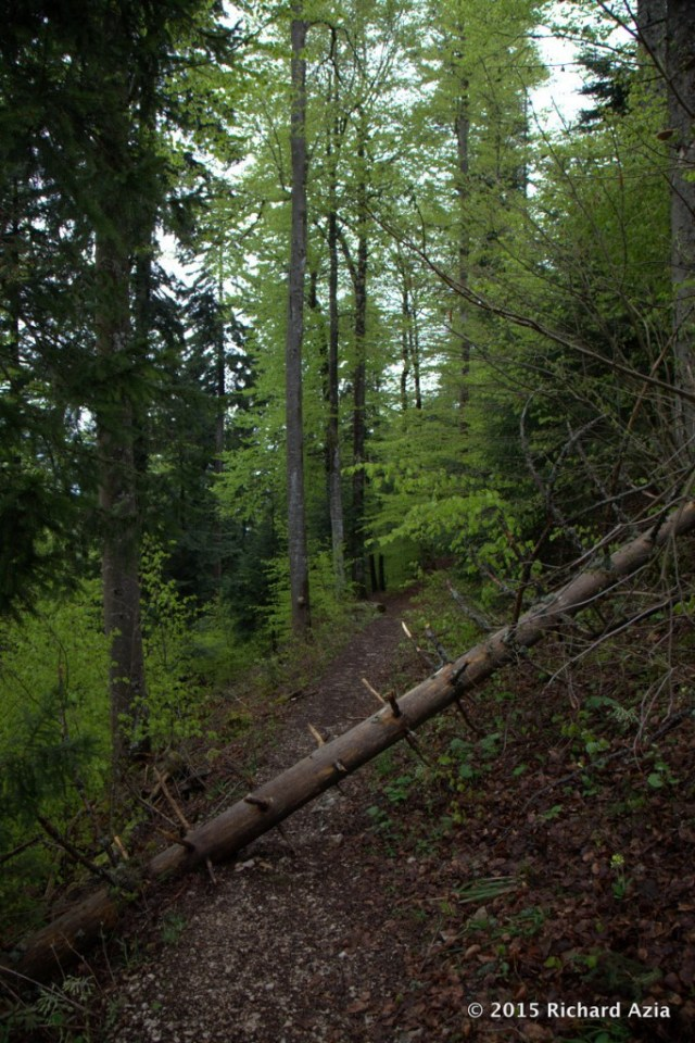 This is the path you take to get up to the top of the Creux de Van