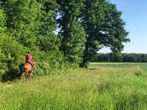 A person rides a horse along a dirt road near some woods.