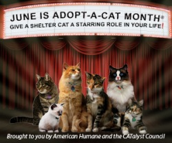 Bagheera the Diabetic Cat reminds you June is Adopt a Shelter Cat Month