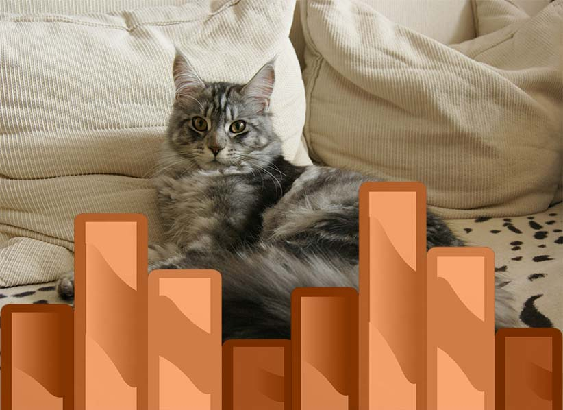 How To Keep A Maine Coon Growth Chart Maine Coon Guide