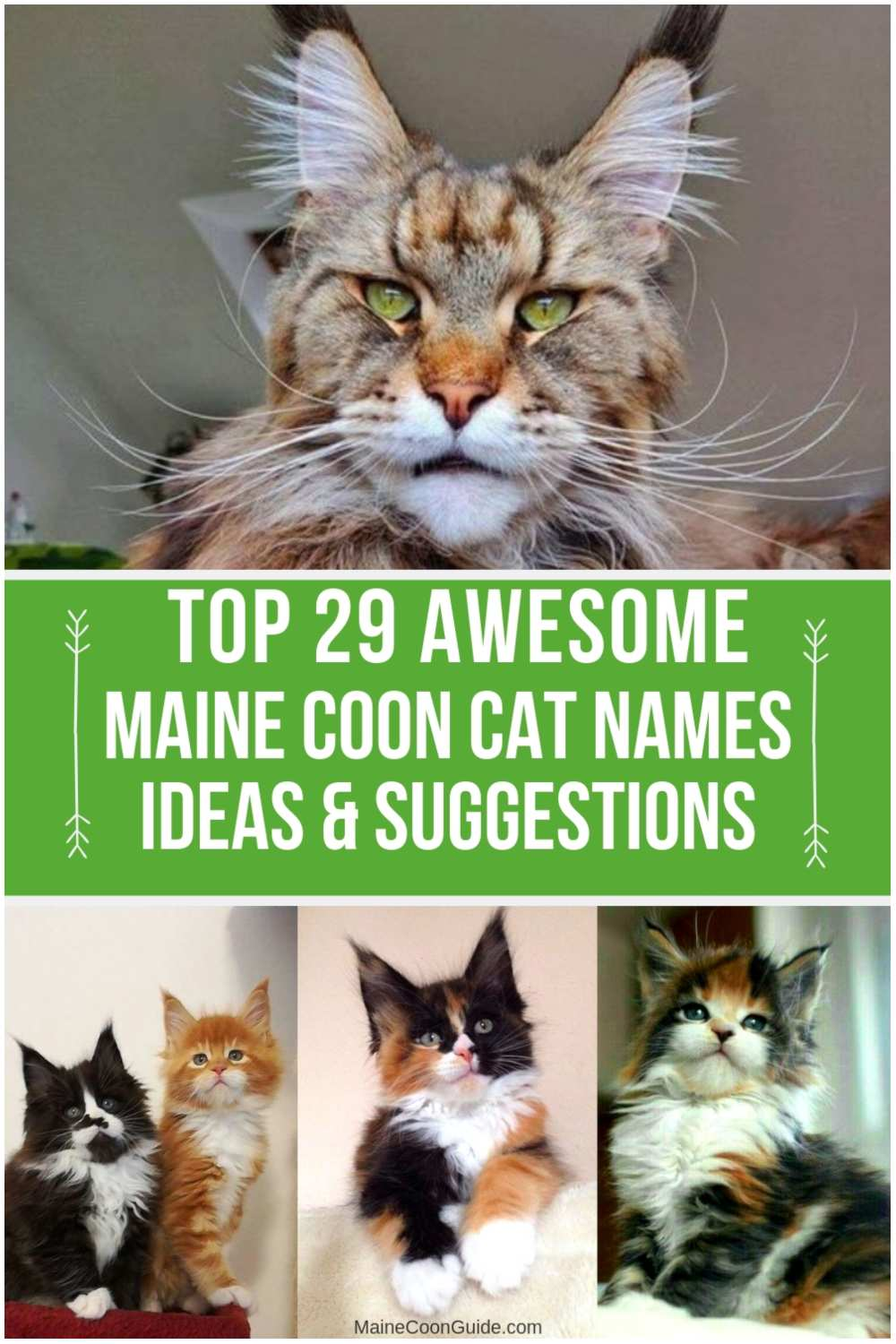 Top 29 Awesome Maine Coon Cat Names Ideas Maine Coon Guide