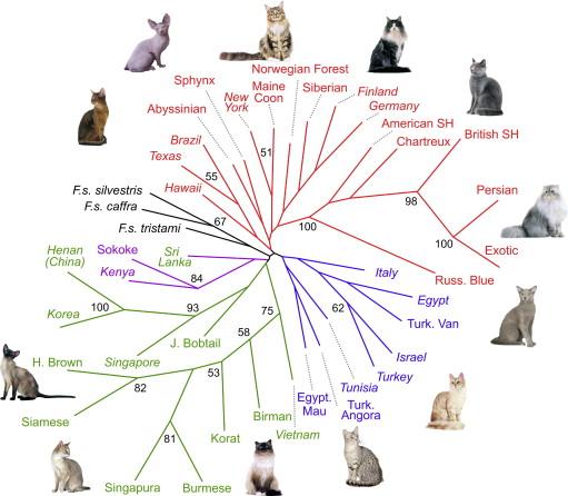 Lapinski 2008 cat breeds