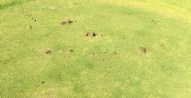 Examples of the thuggery carried out on Castleisland Pitch & Putt Club over the weekend.