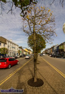 The base of the street trees need to be examined to ensure their continued health according to the adjudicator. ©Photograph: John Reidy
