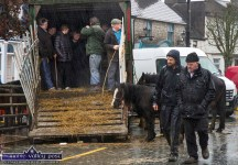 Looking out for the better weather which didn't come in the course of Friday's annual November 1st Horse Fair Day in Castleisland. ©Photograph: John Reidy