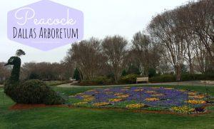 Dallas Arboretum – Dallas Botanical Gardens { 30 Years of Dallas Blooms }