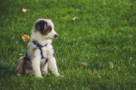 Sod Grass Puppy