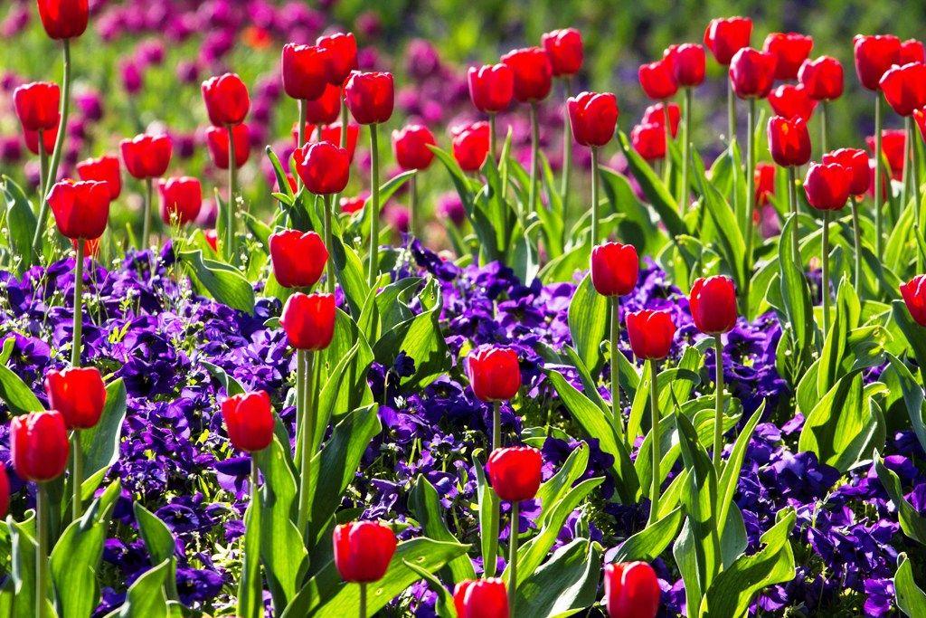 Spring Landscaping Duties Top 5